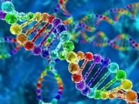 Человеческий геном предложили переписать «с нуля»