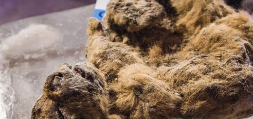 Корейские учёные собираются клонировать вымершего пещерного льва