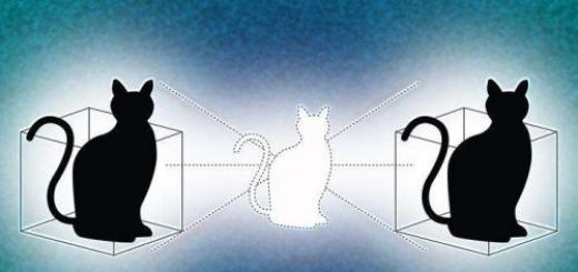 Ученым удалось размножить кошку Шредингера