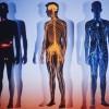 Интересные факты об организме человека