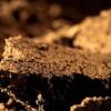 Найдены микроорганизмы, питающиеся веселящим газом
