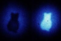 Ученые получили изображения кота Шредингера