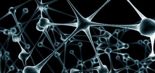 Как РНК нейронов управляет памятью