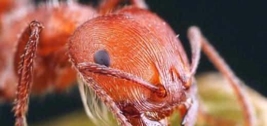 Разработан способ получения топлива из муравьиной кислоты