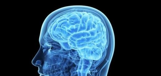 Человеческое зрение улучшилось благодаря укрупнению мозга