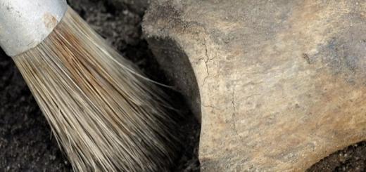 Японские, тайваньские и австралийские ученые обнаружили новый вид первобытного человека. Представители этого вида жили на территории современных стран Восточной Азии от 490 до 10 тыс. лет назад.