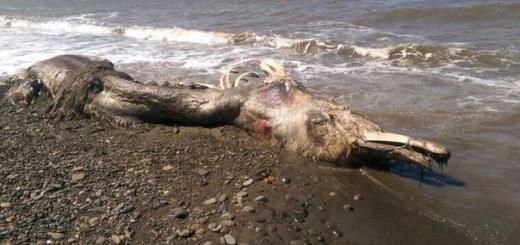 Останки неопознанного гигантского существа выбросило на берег Сахалина