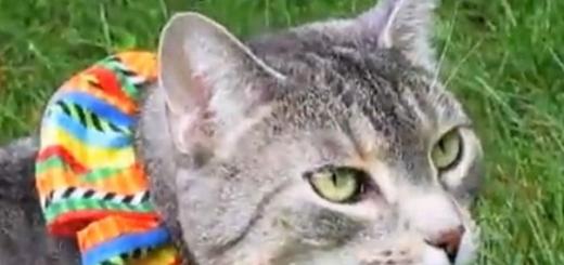 Птиц можно спасти от домашних котов с помощью цветных ошейников