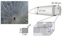 Удивительные свойства паутины продолжают удивлять ученых
