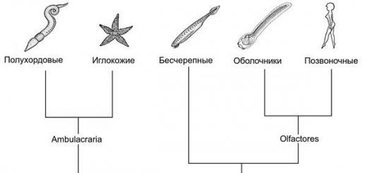 Общий предок вторичноротых мог быть похож на хордовое.