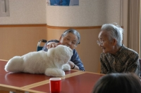 Робот-тюлень поможет одиноким пожилым людям