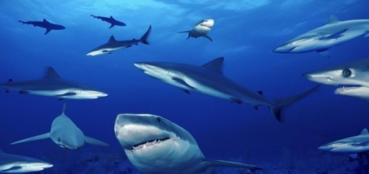 Ученые обнаружили у акул признаки личности