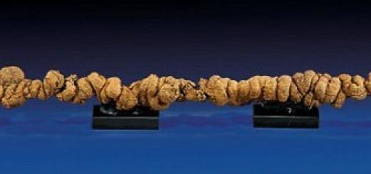 Очень длинные древние окаменелые фекалии уйдут с молотка