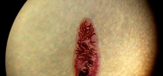 12 паразитов, способных управлять поведением своих хозяев
