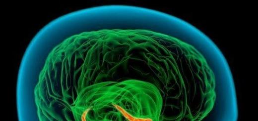 Начато самое масштабное исследование человеческого мозга