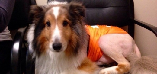 В США ветеринар-стажер спас собаку за минуту до усыпления