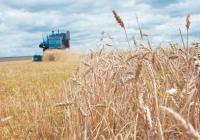 Ученые прогнозируют катастрофическое снижение урожайности к 2050 году.