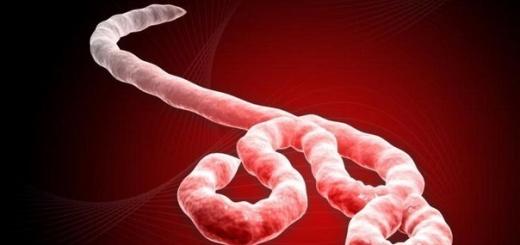 Всемирная организация здравоохранения: Африканская эпидемия лихорадки Эбола теперь представляет угрозу международного масштаба