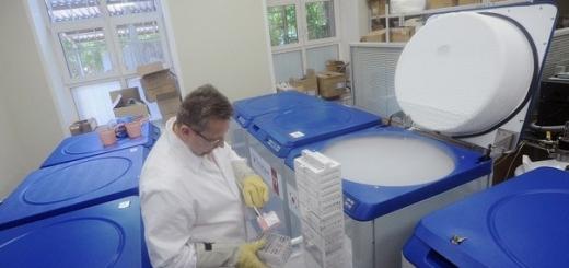 Японские учёные вырастили из стволовых клеток ткань лёгочных альвеол