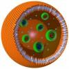Сделан важный шаг на пути построения полимерных организмов.