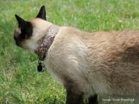 Как использовать кота для взлома соседского WiFi